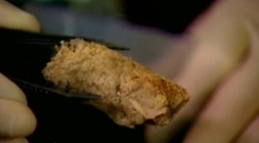 Fossilised human poop