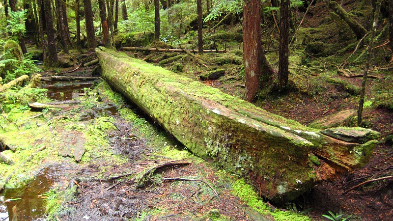 Natural Burials On Vancouver Island