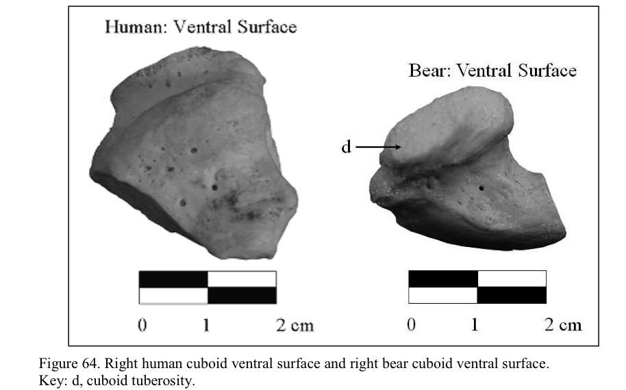 Bears, Humans and Deer: disambiguation at last. | Northwest Coast ...