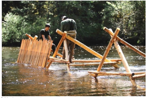 Building Koeye Weir. Photo by Grant Callegari via indiegogo.