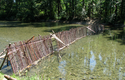 Cowichan fish weir reconstruction.  Photo by flickr user klahowya.
