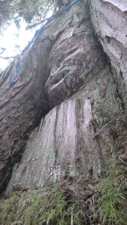 Arborglyph in Nimpkish Valley.  Courtesy of 'Namgis Nation via Jim Stafford.