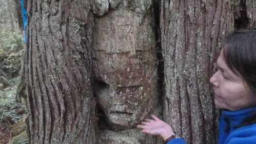 Dawn Cramer inspects an arborglyph deep in the heart of the Nimpkish Valley.  Photo courtesy of the 'Namgis Nation via Jim Stafford