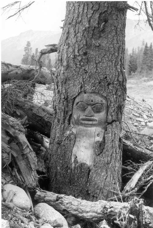 This mask, carved in a tree on a trading trail near what is now the Haines Highway near the Yukon-British Columbia border, marked the northern boundary of Tlingit territory. Source: Yukon Government, click to view.