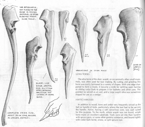 Ulna tools, drawing by Hilary Stewart.