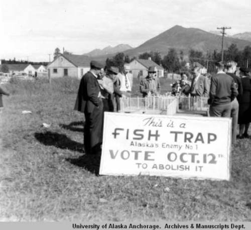 Fish Traps: Alaska's Enemy Number One.  Anchorage, ca. 1948. Ssource: http://vilda.alaska.edu/cdm/singleitem/collection/cdmg13/id/1930/rec/9