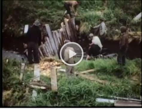 Screen shot from video of men building a fish weir near Atka, ca. 1946.  Click to see video.  Source: http://vilda.alaska.edu/cdm/singleitem/collection/cdmg11/id/37038/rec/36