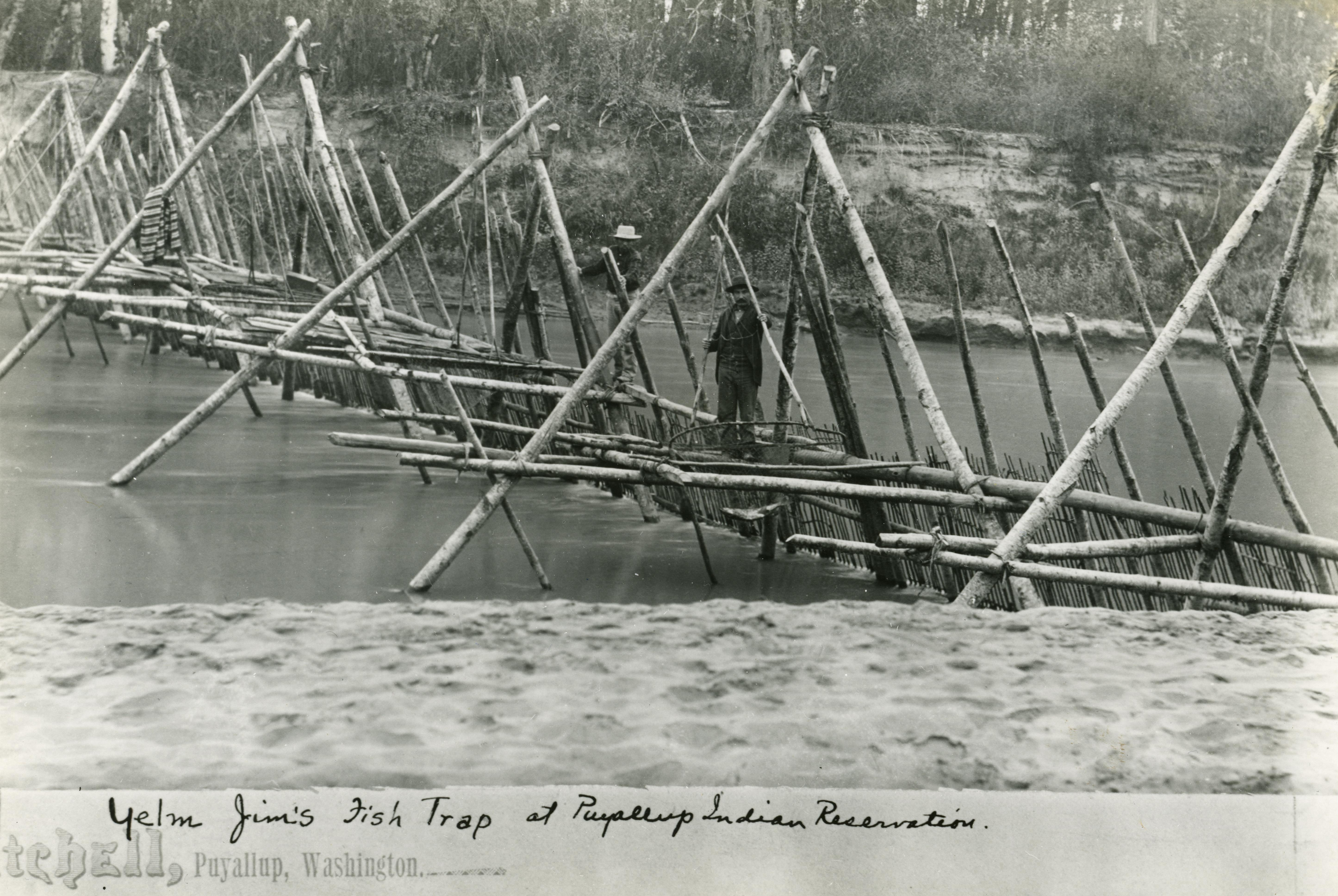 Yelm jim s fish weir at puyallup northwest coast archaeology for Puyallup river fishing