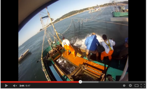 Video of commercial reefnet fishery.  Click image to watch.