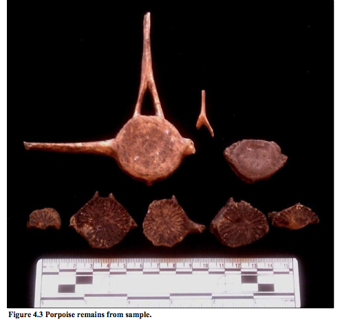 Porpoise remains from 45WH1.  Source: Dubeau thesis.