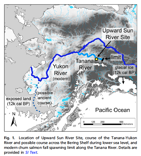 Location of Upward Sun River Site in relation to Alaska/Beringia and Chum migrations. Source: Halffman et al 2015