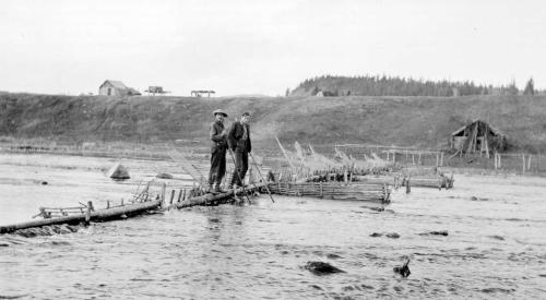 Salmon weir, Nautley River, Fraser Lake ,October, 1909. Photo by Frank Swannell. Source: BC Archives, https://goo.gl/qwJFnr .