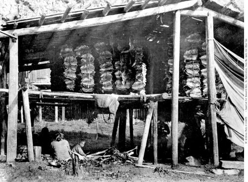 Drying fish in structures at Hagwilget, ca. 1890s. Source: BC Archives https://goo.gl/4aAy6w