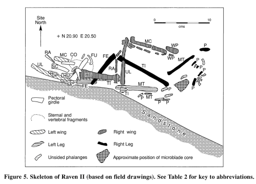 "Raven Burial II at Tse'K'wa - one of two apparently deliberate raven burials from the deeper layers. Note the microblade core ""grave good"". Source: Driver 1999 American Antiquity (and SFU download)"