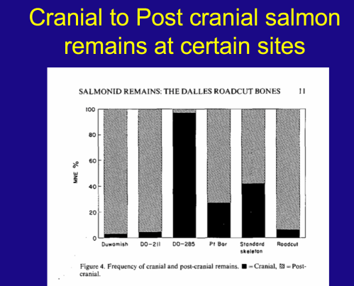 From Virginia Butler, 1993. Standard salmon skeleton contains 42% cranial bones. Note that archaeological site DO-285 is almost all cranial bones, while DO-211 is almost all post-cranial. Meanwhile, Pt Bar is a natural assemblage of dead salmon which is fairly similar to the standard skeleton ratios. Stolen from my intro archaeology course.