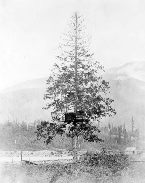 Tree cache near Yale, 1868. From Eastcote Collection; Vancouver City Archives, https://searcharchives.vancouver.ca/salmon-cache-2